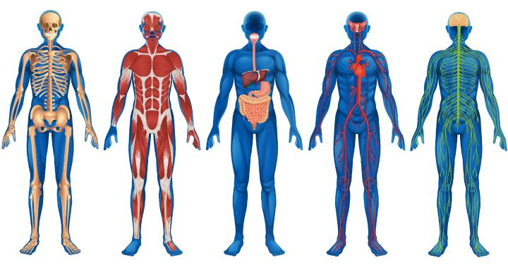 the incredible human body essay Free human body papers, essays, and research papers  the human body -  the human body is an incredible system that is capable of working a multitude of .