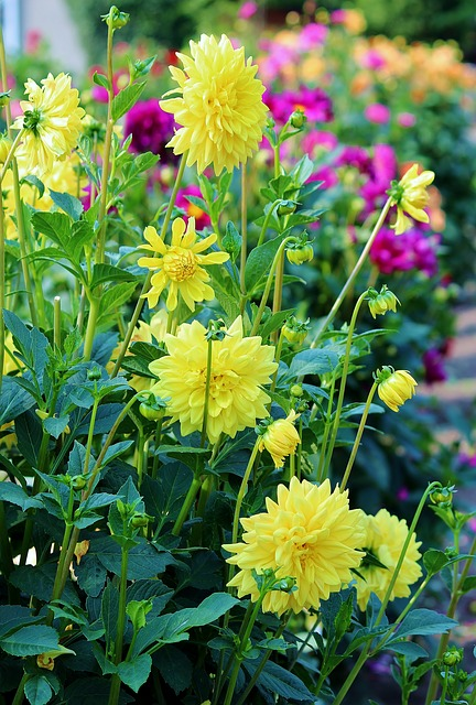 10 Most Common Flowers And Their Meaning